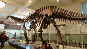 big dino AMNH